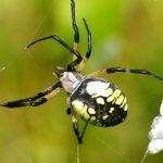 عنكبوت تعرف على أنواع العنكبوت وحياتة صور ميكس 9