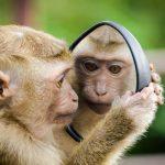 -قرد-تعرف-على-حياة-القرود-وأنوعها-صور-ميكس-1-150x150 صور قرد تعرف على حياة القرود وأنوعها