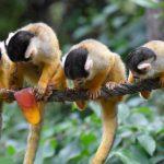 -قرد-تعرف-على-حياة-القرود-وأنوعها-صور-ميكس-10-150x150 صور قرد تعرف على حياة القرود وأنوعها