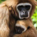 قرد تعرف على حياة القرود وأنوعها صور ميكس 12