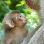 -قرد-تعرف-على-حياة-القرود-وأنوعها-صور-ميكس-13-150x150 صور قرد تعرف على حياة القرود وأنوعها