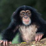 قرد تعرف على حياة القرود وأنوعها صور ميكس 14