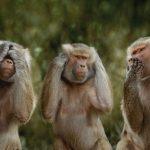 قرد تعرف على حياة القرود وأنوعها صور ميكس 15