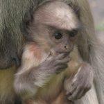 -قرد-تعرف-على-حياة-القرود-وأنوعها-صور-ميكس-16-150x150 صور قرد تعرف على حياة القرود وأنوعها