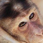 -قرد-تعرف-على-حياة-القرود-وأنوعها-صور-ميكس-17-150x150 صور قرد تعرف على حياة القرود وأنوعها