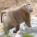 قرد تعرف على حياة القرود وأنوعها صور ميكس 18