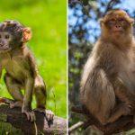 قرد تعرف على حياة القرود وأنوعها صور ميكس 20
