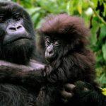 قرد تعرف على حياة القرود وأنوعها صور ميكس 22