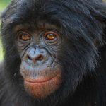 قرد تعرف على حياة القرود وأنوعها صور ميكس 23