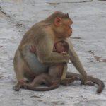 قرد تعرف على حياة القرود وأنوعها صور ميكس 24