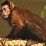 -قرد-تعرف-على-حياة-القرود-وأنوعها-صور-ميكس-26-150x150 صور قرد تعرف على حياة القرود وأنوعها