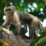-قرد-تعرف-على-حياة-القرود-وأنوعها-صور-ميكس-27-150x150 صور قرد تعرف على حياة القرود وأنوعها