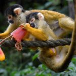 -قرد-تعرف-على-حياة-القرود-وأنوعها-صور-ميكس-29-150x150 صور قرد تعرف على حياة القرود وأنوعها