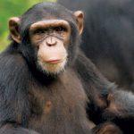 -قرد-تعرف-على-حياة-القرود-وأنوعها-صور-ميكس-30-150x150 صور قرد تعرف على حياة القرود وأنوعها