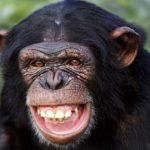 قرد تعرف على حياة القرود وأنوعها صور ميكس 32