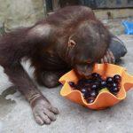 -قرد-تعرف-على-حياة-القرود-وأنوعها-صور-ميكس-34-150x150 صور قرد تعرف على حياة القرود وأنوعها