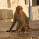 -قرد-تعرف-على-حياة-القرود-وأنوعها-صور-ميكس-35-150x150 صور قرد تعرف على حياة القرود وأنوعها