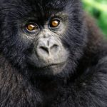 -قرد-تعرف-على-حياة-القرود-وأنوعها-صور-ميكس-36-150x150 صور قرد تعرف على حياة القرود وأنوعها