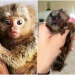 قرد تعرف على حياة القرود وأنوعها صور ميكس 37
