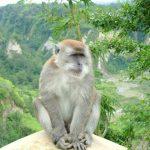 -قرد-تعرف-على-حياة-القرود-وأنوعها-صور-ميكس-38-150x150 صور قرد تعرف على حياة القرود وأنوعها
