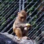 -قرد-تعرف-على-حياة-القرود-وأنوعها-صور-ميكس-39-150x150 صور قرد تعرف على حياة القرود وأنوعها