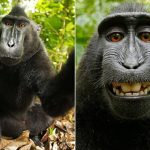 قرد تعرف على حياة القرود وأنوعها صور ميكس 4