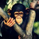 قرد تعرف على حياة القرود وأنوعها صور ميكس 40