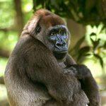-قرد-تعرف-على-حياة-القرود-وأنوعها-صور-ميكس-41-150x150 صور قرد تعرف على حياة القرود وأنوعها