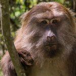 قرد تعرف على حياة القرود وأنوعها صور ميكس 45