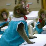 -قرد-تعرف-على-حياة-القرود-وأنوعها-صور-ميكس-5-150x150 صور قرد تعرف على حياة القرود وأنوعها