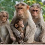 قرد تعرف على حياة القرود وأنوعها صور ميكس 9