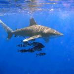 قرش تعرف على حياة القرش وأنواعة صور ميكس 1