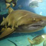 قرش تعرف على حياة القرش وأنواعة صور ميكس 16