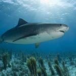 قرش تعرف على حياة القرش وأنواعة صور ميكس 2