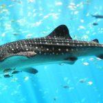 قرش تعرف على حياة القرش وأنواعة صور ميكس 23