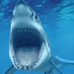 قرش تعرف على حياة القرش وأنواعة صور ميكس 3