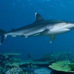 قرش تعرف على حياة القرش وأنواعة صور ميكس 31