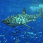 قرش تعرف على حياة القرش وأنواعة صور ميكس 35