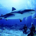 قرش تعرف على حياة القرش وأنواعة صور ميكس 41