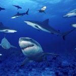 قرش تعرف على حياة القرش وأنواعة صور ميكس 42