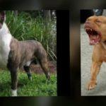 كلاب 2019 أنواع الكلاب ومميزتها صور ميكس 14