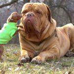 كلاب 2019 أنواع الكلاب ومميزتها صور ميكس 16