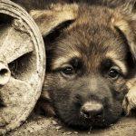 كلاب 2019 أنواع الكلاب ومميزتها صور ميكس 21