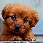 كلاب 2019 أنواع الكلاب ومميزتها صور ميكس 3
