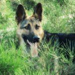 كلاب 2019 أنواع الكلاب ومميزتها صور ميكس 38