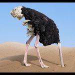 -نعام-معلومات-كاملة-عن-النعام-وأنوعها-صور-ميكس-40-150x150 صور نعام معلومات كاملة عن النعام وأنوعها