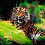 -نمر-2019-معلومات-النمور-كاملة-صور-ميكس-11-150x150 صور نمر 2019 معلومات النمور كاملة