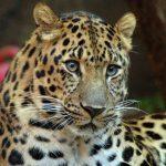 -نمر-2019-معلومات-النمور-كاملة-صور-ميكس-12-150x150 صور نمر 2019 معلومات النمور كاملة