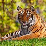 -نمر-2019-معلومات-النمور-كاملة-صور-ميكس-13-150x150 صور نمر 2019 معلومات النمور كاملة