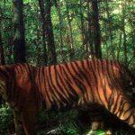 -نمر-2019-معلومات-النمور-كاملة-صور-ميكس-21-150x150 صور نمر 2019 معلومات النمور كاملة